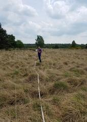 Two Stephen F. Austin State University students spent 10 weeks in the Netherlands collecting fire fuel load data as a part of an ongoing effort led by Dr. Brian Oswald to assist the country in addressing the growing threat of wildland fires. Since 2012, Oswald, Joe C. Denman Distinguished Professor of fire ecology at SFA's Arthur Temple College of Forestry and Agriculture, and students enrolled in the college have collaborated with public safety agencies in the Netherlands to collect fire fuel load data that will ultimately be used to develop a wildfire spread model that can predict wildfire behavior. Pictured, senior fire management major Jessica Pruneda collects fuel load data.
